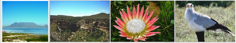 Kent Flower Tour Mountain, Protea on Flower tour and Bird